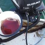 Lidt af dagens fangst